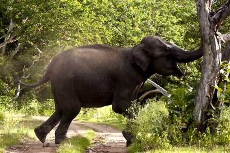 elephant-600x400_1.jpg