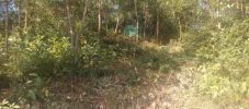 খুটাখালীতে বন্য হাতি উপড়ে ফেলেছে ৩ শতাধিক গাছ